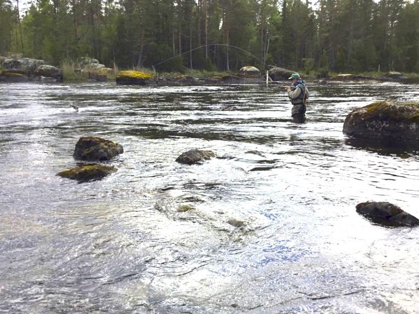 Drömfiske i Gimdalen. Foto Gimdalens fvo